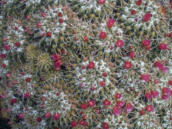 Guatiza, Espagne : flowers