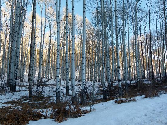Aspen Highlands: Aspens at McClure Pass