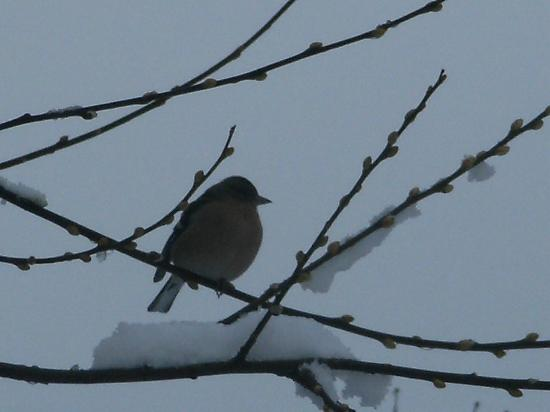 The Willows: winter visitor