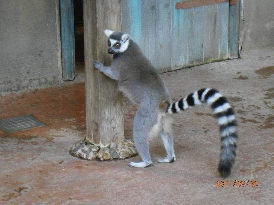 Hamburg Zoo: 2