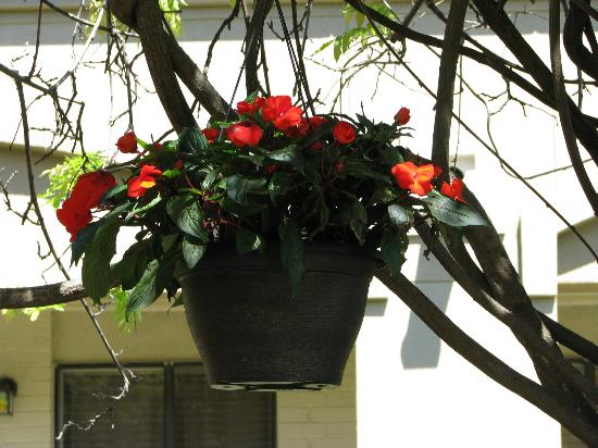 Vineyard Court Designer Suites Hotel: Hanging basket in the gazebo