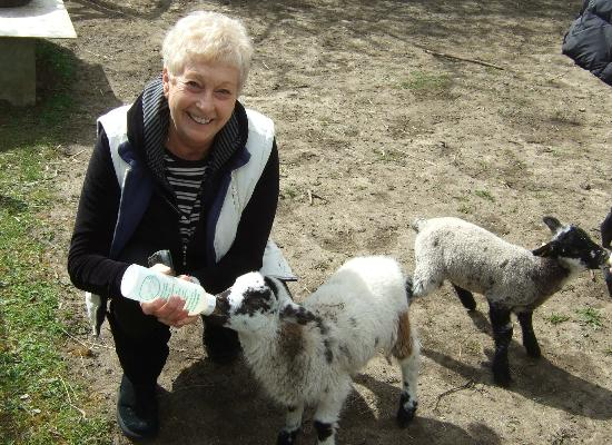 Potash Barns: We were able to feed the baby lambs....