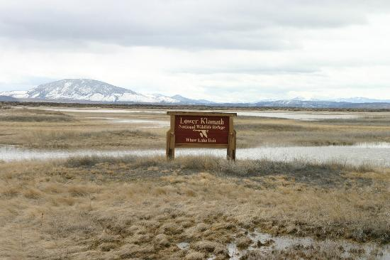 Tule Lake National Wildlife Refuge: A wide open view of the preserve
