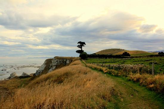 Miharotia House: Coastline hike - gorgeous colors