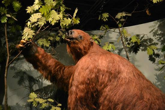 Museum of Natural History: The nine-foot-tall Ground Sloth