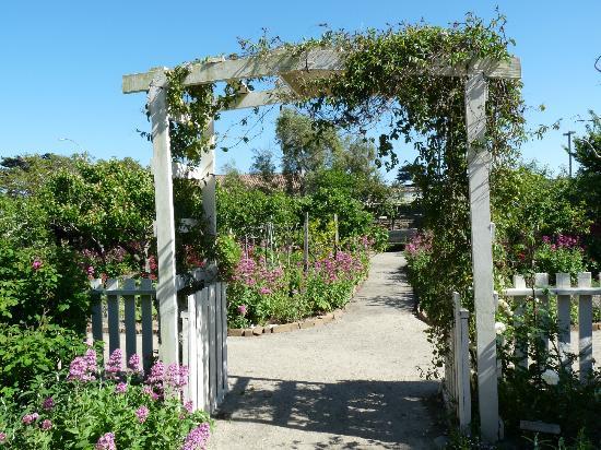 Cooper-Molera Adobe: The trellis in the garden