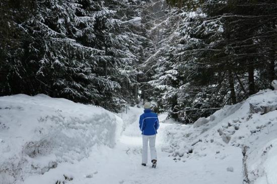 Der Waldhof: Forest walk next to hotel