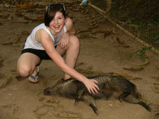 Banana Bank Lodge & Jungle Horseback Adventure: My daughter petting Juanita .. the pet pig