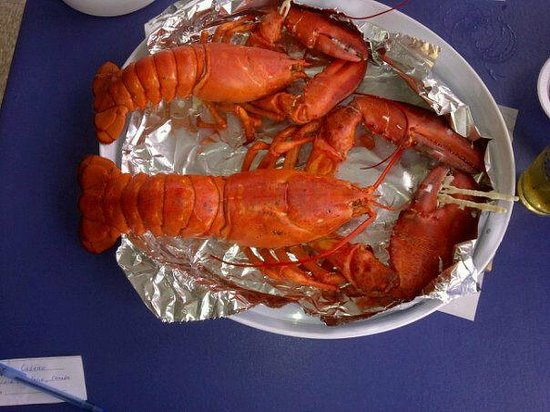 Gateway Lunts Lobster Pound: The massive Lobster!!