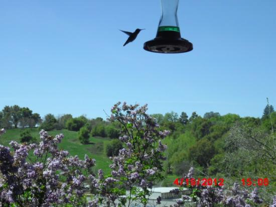 Barretta Gardens Inn Bed and Breakfast: Hummingbirds