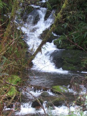 Quinault Rain Forest: Spring Falls