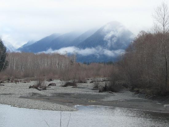 Quinault Rain Forest: The O's