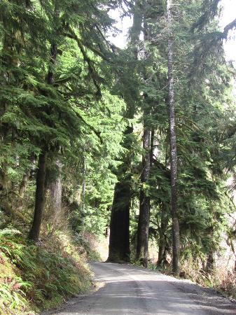 Quinault Rain Forest: Loop Drive Around Lake Q
