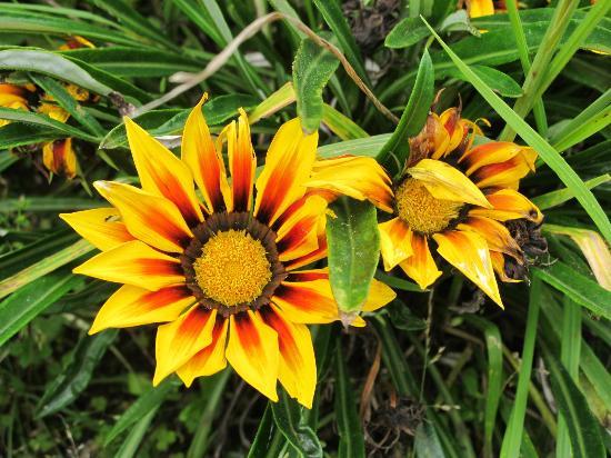 Ali Shungu Mountaintop Lodge: garden beauty
