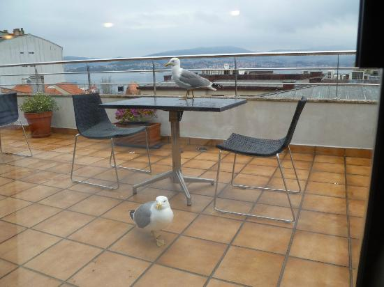 Hotel America Vigo: terraza del atico donde se desayuna, con las gaviotas esperando por el desayuno