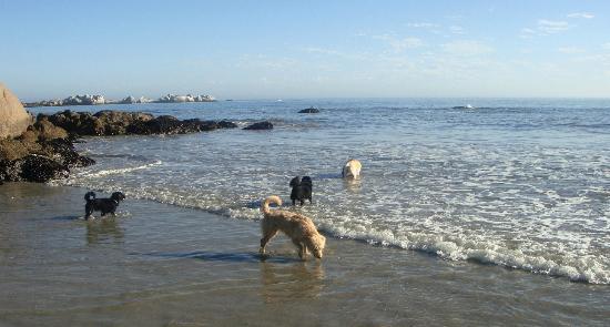 La Baleine Paternoster: Am Strand mit den Hunden