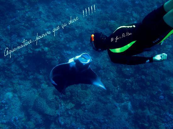 Aquanature: Free diver and manta ray