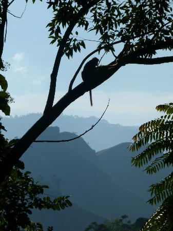 Waterfalls Homestay: The view towards Ella gap, with monkey's