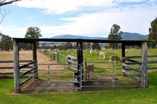 Starline Alpacas Farmstay Resort: Just out the front of our Suite