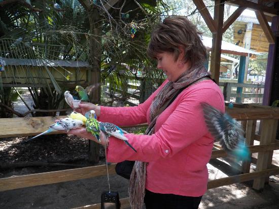 Tampa's Lowry Park Zoo: Parakeet