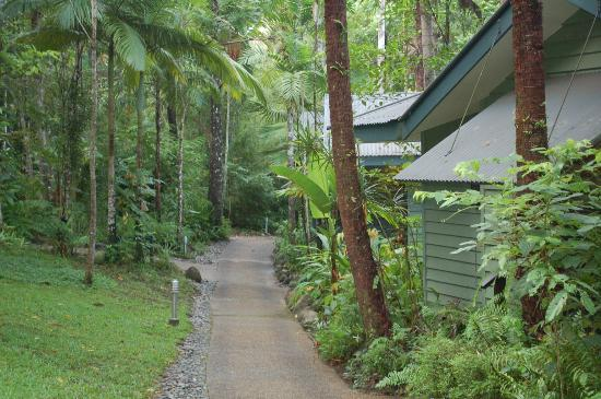 Silky Oaks Lodge: Path to rooms