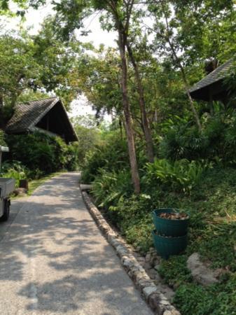Kamalaya Koh Samui: the natural environment at Kamalaya