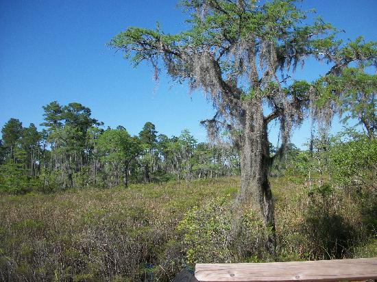 Mississippi Sandhill Crane National Wildlife Refuge: Bayou Castille along the hiking path