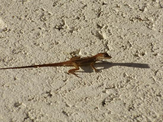 Beaches Turks & Caicos Resort Villages & Spa: These little guys are everywhere!