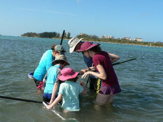 Sarasota Bay Explorers: We found something!