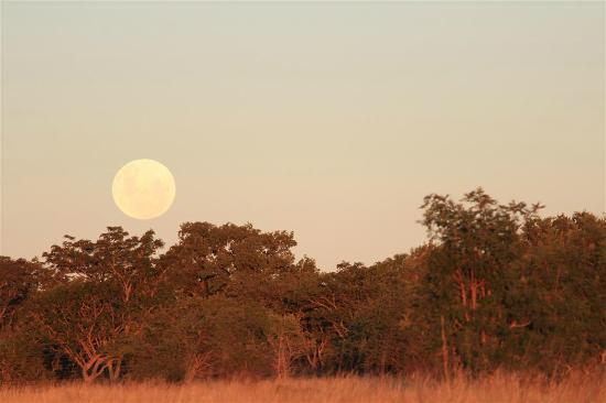 Dunroamin Safaris: Surroundings