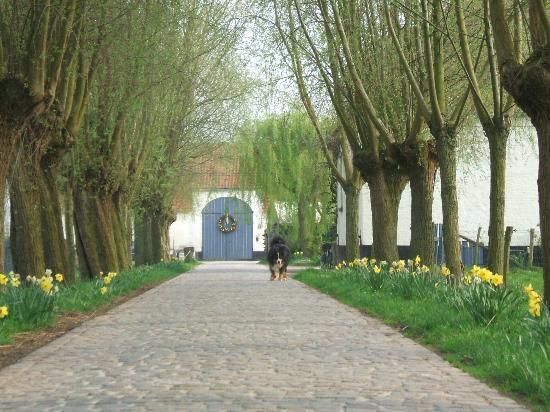 Hofstede De Stamper, Damme - Entrance