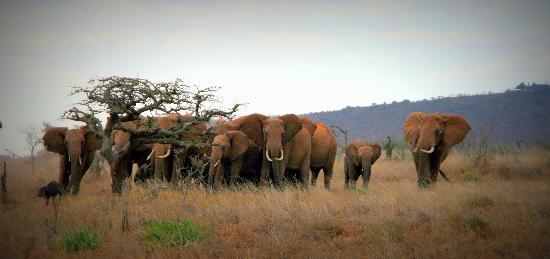 Vumbi Jeep Safaris: .