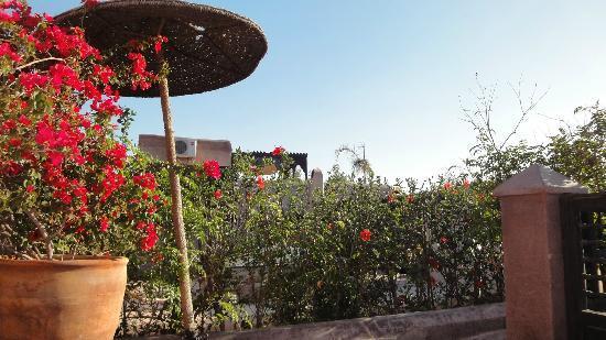 Riad Dar Darma: Roof Terrace
