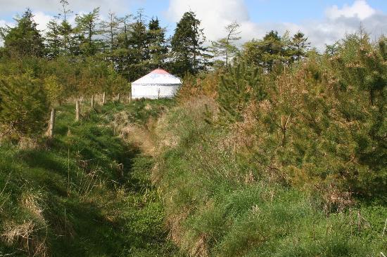 Boutique Camping: Yurt