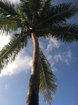 Presidente Inter-Continental Cozumel Resort & Spa: palm tree on the beach