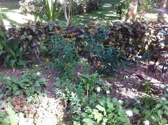 Aswan Botanical Garden: the island