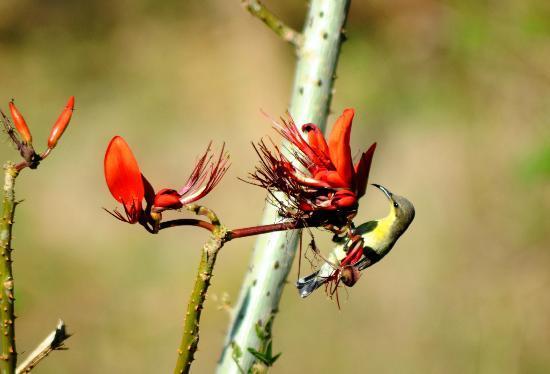 Wild Brook Retreat: Sunbird female - Wild brook