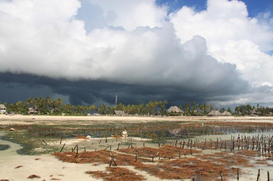 Blue Oyster Hotel: View from the seaweed farm at low tide