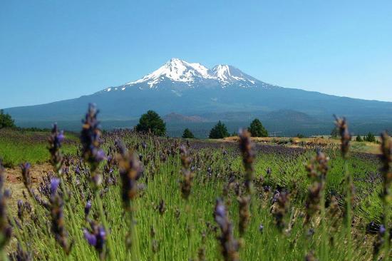 Mount Shasta: Mt. Shasta