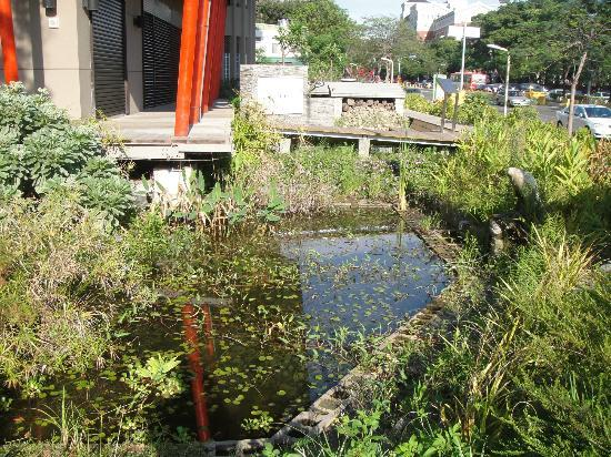 Magic School of Green Technology: Pond out front