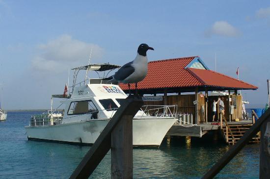 Dive shack boat picture of divi flamingo beach resort and casino kralendijk tripadvisor - Dive e divi ...