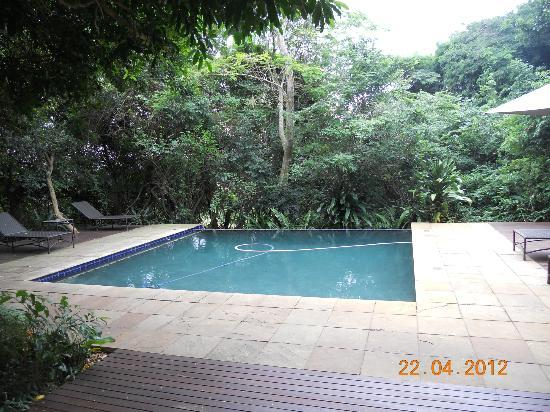Forest Suites Hotel: Swimming pool