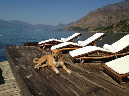 Laguna Lodge Eco-Resort & Nature Reserve: La compañía más agradable, me encanto