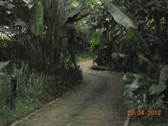 Forest Suites Hotel: Pathways trought milkwood forest