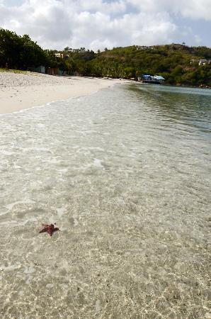 Grand Royal Antiguan Beach Resort: Morning beach..I found starfish while jogging