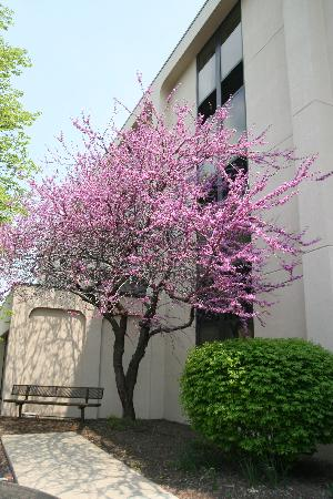 SureStay Plus Hotel Chicago Lombard: Spring is Blooming