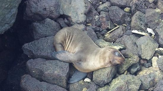 Galapagos Unbound - ROW Day Tours and Adventures: Sea Lions everywhere!