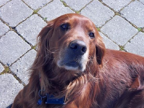 Roadford House Restaurant & Accommodation: Beans our ambassador and lovable pet