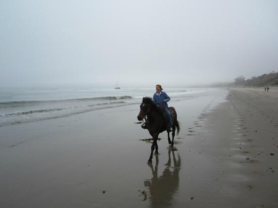 Ojai on Horseback : Horseback Riding on Summerland Beach, CA