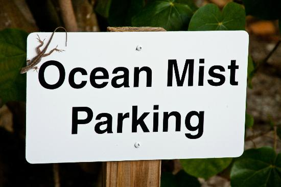 Mitchell's Sandcastles: Lizard on the parking sign